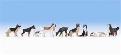 15717 Собаки - фото 12806