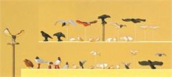 10169 Голуби, чайки, вороны и хищные птицы - фото 13127