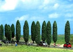 6229 Тополь (10) деревья - фото 13229