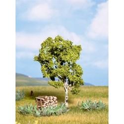 21640 Береза 11,5 см деревья - фото 13369