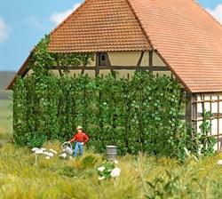 1264 Дикий виноград - фото 13564
