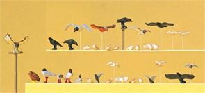 10169 Голуби, чайки, вороны и хищные птицы