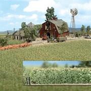 1202 Кукурузное поле