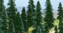 6405 Деревья Ели 60-120мм без корня 10шт.