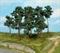1413 Сосны 10-16см (14шт) деревья - фото 12006
